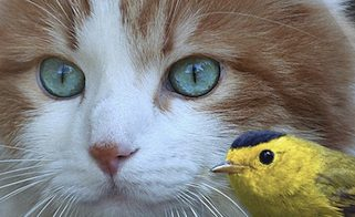 Safe Cats, Safe Birds Municipal Award