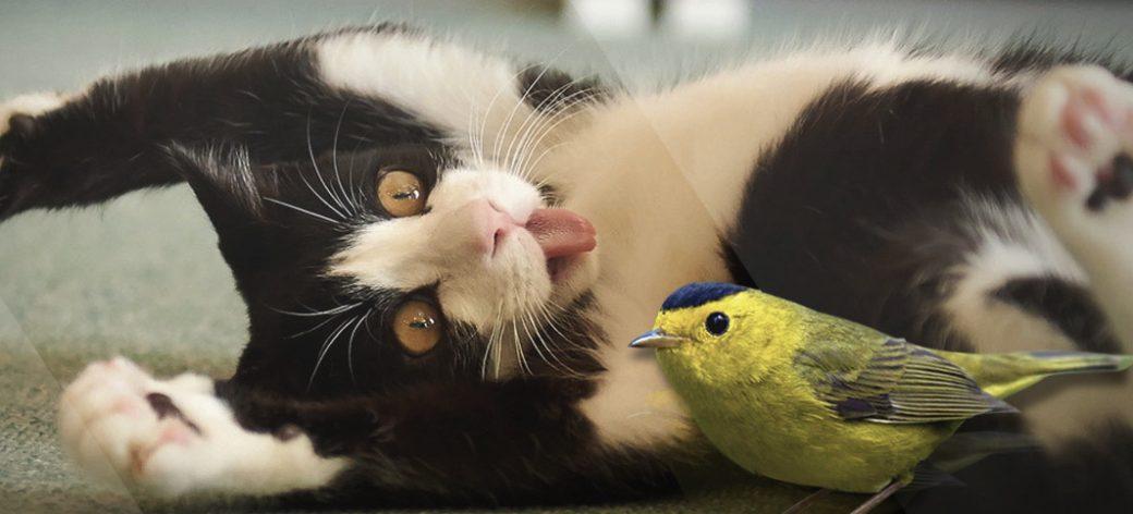 Cats & Birds Educational Program, Gr. 4 to 6