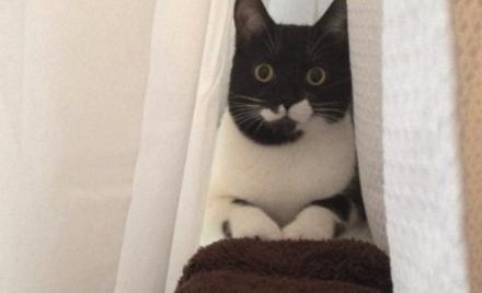 Enclos pour chat et «chatios»