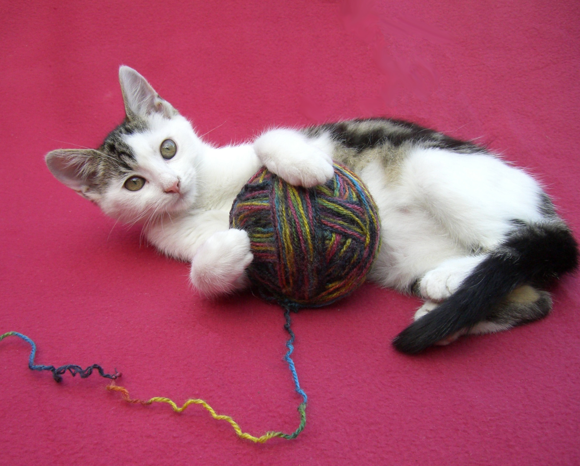 Don T Let Cats Have Yarn