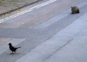 Cat_and_Bird_on_Road_Credit_Anders_Sandberg