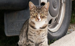 Norfolk County Feral Cat Call