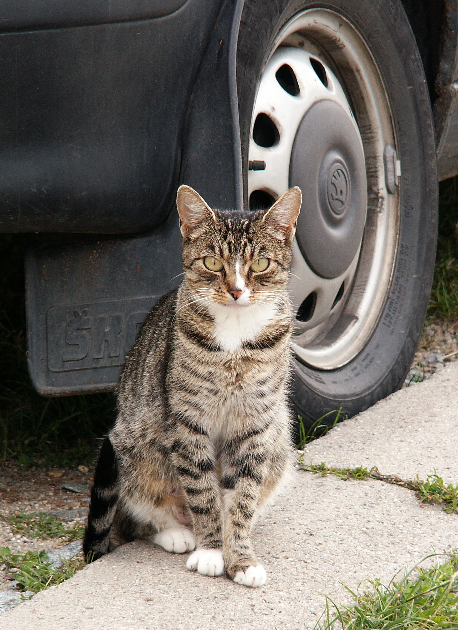 Cat_and_Car_2_Sam_Rawlins