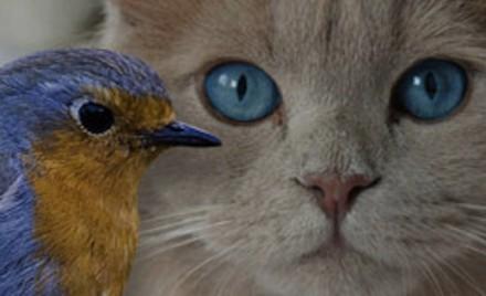 Relevez le défi : protégez les chats et sauvez les oiseaux