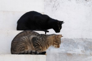 Cats_Focussed_Credit_Alves_Gaspar