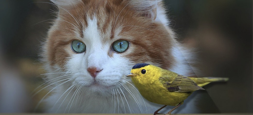 Take the Challenge: Keep Cats Safe & Save Bird Lives