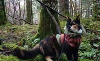 Coco, a Cat & Bird Success Story