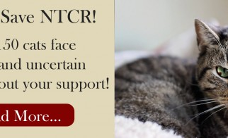 North Toronto Cat Rescue: A Sanctuary