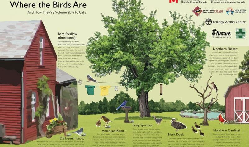 Where Birds Are & Why They're Vulnerable to Cats