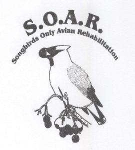 SOAR logo cropped