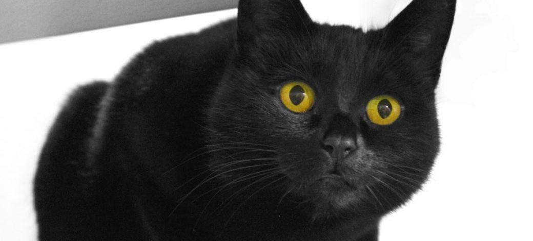 Hallowe'en for Cats