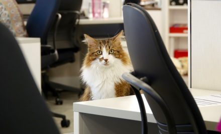 Who is the office cat at Pets Plus Us?