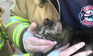 Auckland Firemen Rescued 1000 Cats in 5 Years