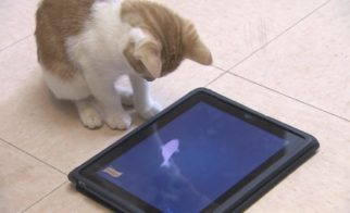 iPads for Cats!?!