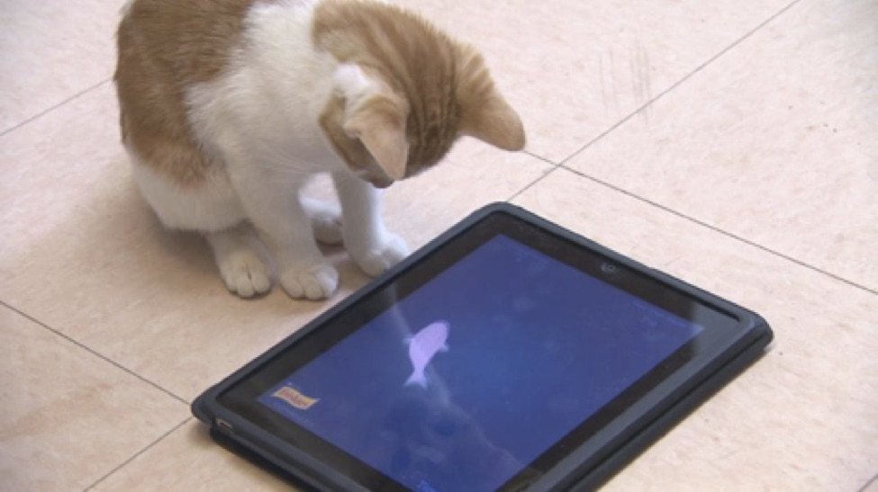 cat-using-ipad