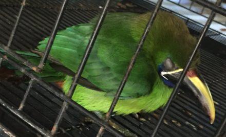 An Emerald Bird Called Emi