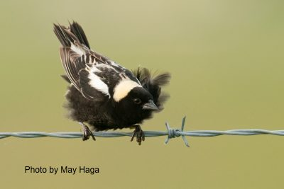 Bird Studies Canada's Top Six Ways to Help Birds
