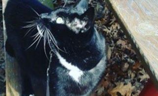 Leash-Training a Scaredy Cat
