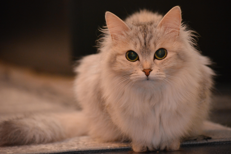 cat-2146089
