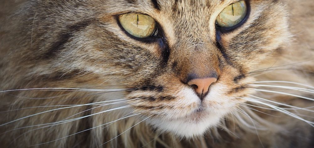 Are we overcoming the cat overpopulation crisis?