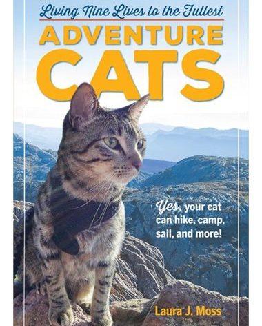 Adventure Cats