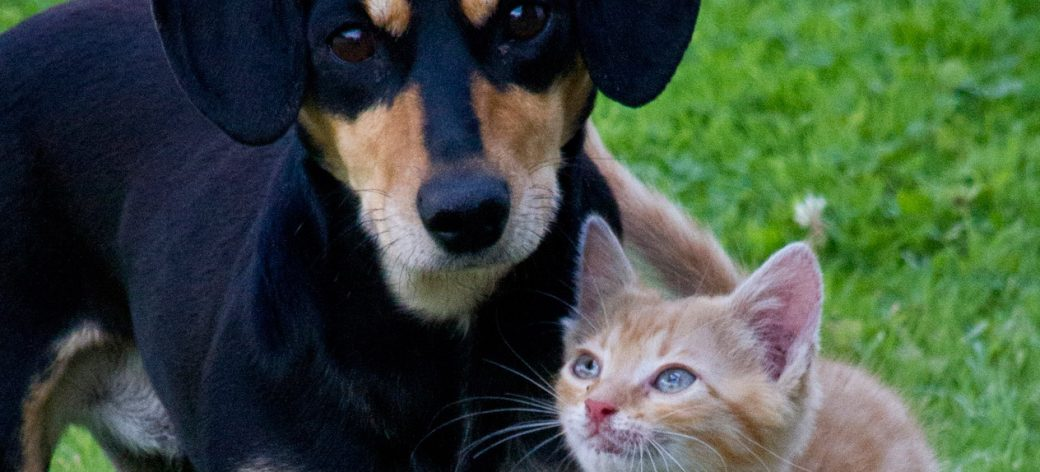 Pet Population Dynamics Study