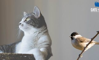Comox Valley Cats & Birds