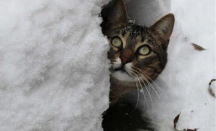Les chats, les oiseaux et le temps froid