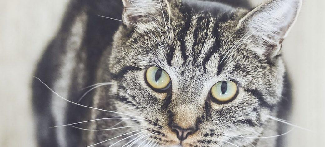 Surpopulation des chats: la situation s'améliore-t-elle?