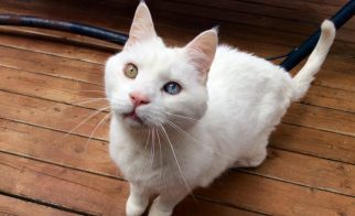 Cat Training Basics