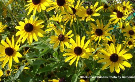 Bird Friendly Plants for your Garden