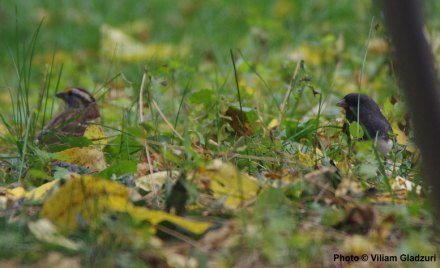 Spring Migratory Backyard Birds