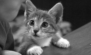 Think Like a Cat!