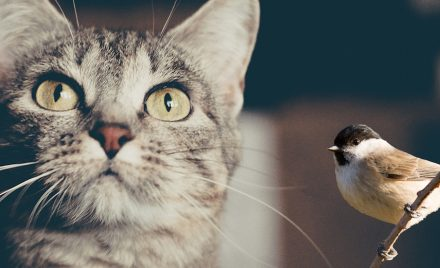 I Help Birds by Helping Cats