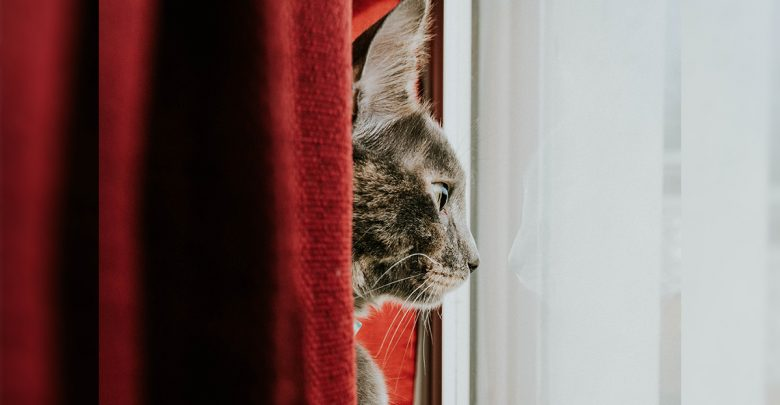 Top 5 Reasons to Keep Your Cat Indoors